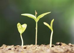 5 Maneras de Aplicar Principios de Emprendimiento a Cualquier Carrera